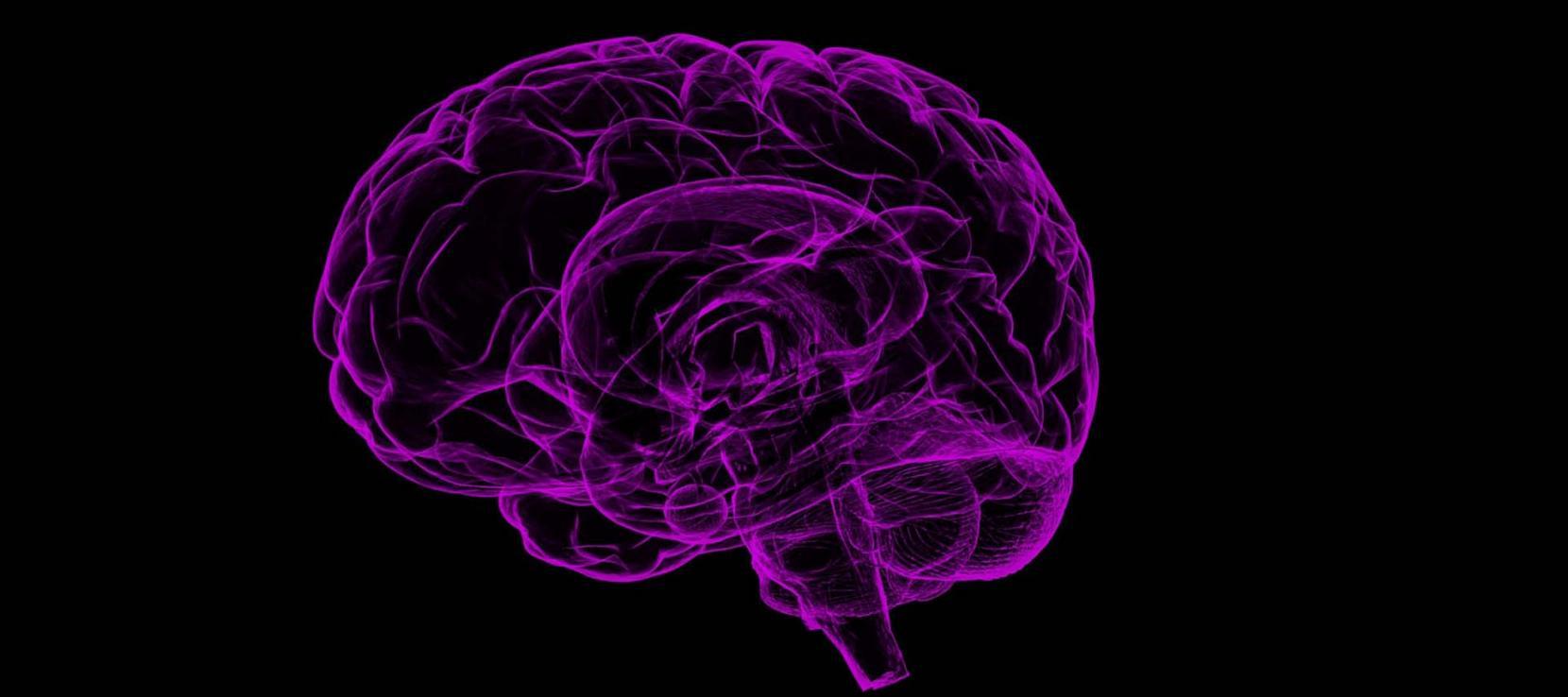représentation graphique du cerveau